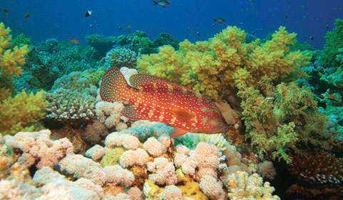 Đảo San Hô tại Pattaya Thái Lan