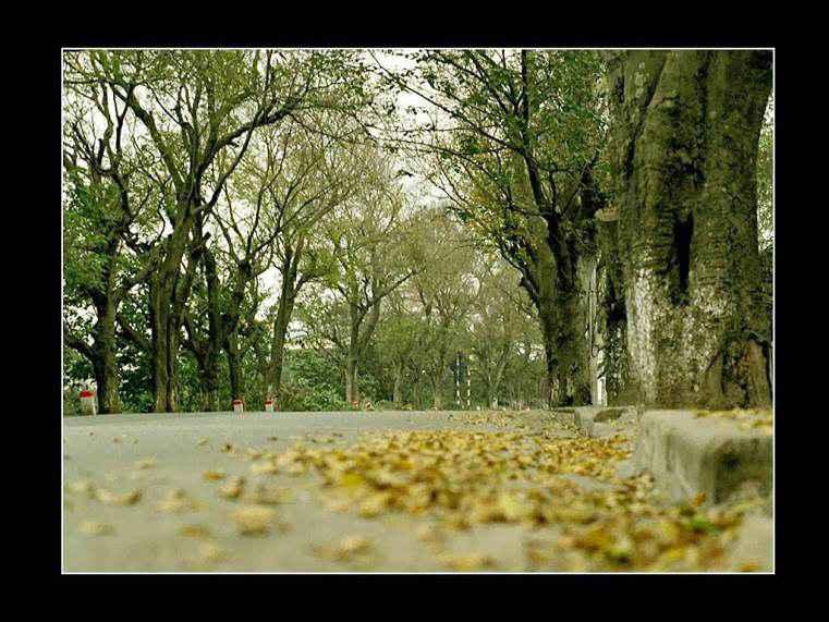 Mùa thu Hà Nội.