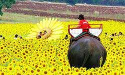 Du lịch thái Lan cỡi voi