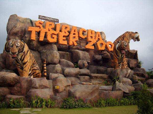 Du lịch Sriracha Tiger Zoo Thái Lan