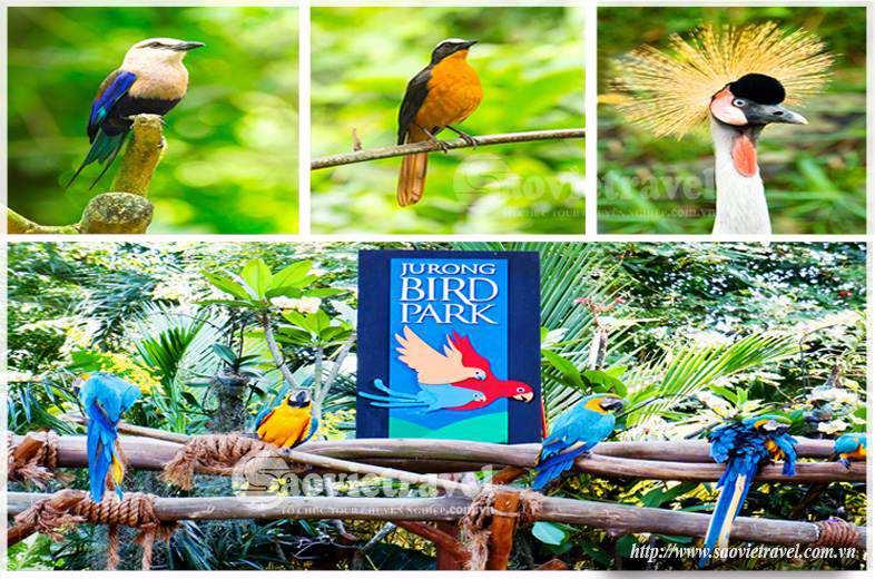 Du lịch Singapore - Vuon chim jurong
