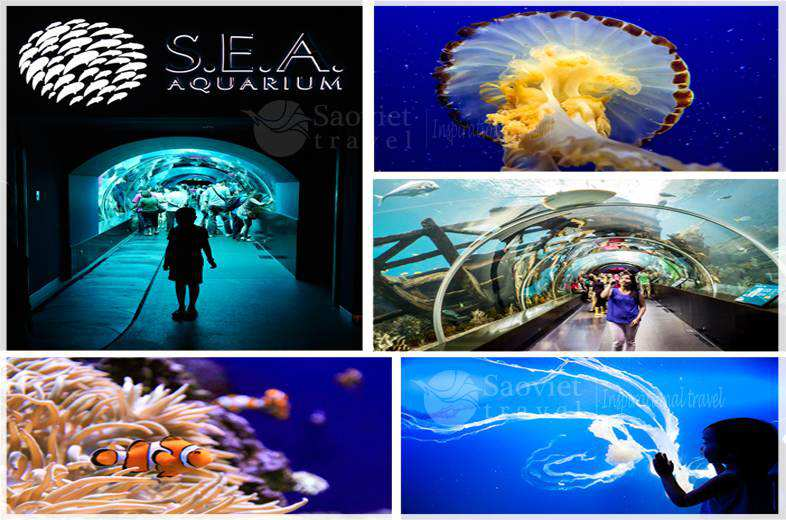 sea-aquarium_du-lich-saovietravel
