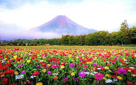 Du lịch Nhật Bản 4 ngày 3 đêm khởi hành từ Sài Gòn giá tốt 2020