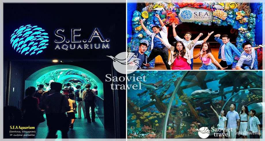 Du lịch Singapore - Thuỷ cung lớn nhất thế giới –  S.E.A Aquarium